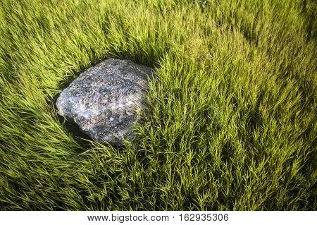 Background photo, stone lying in green grass