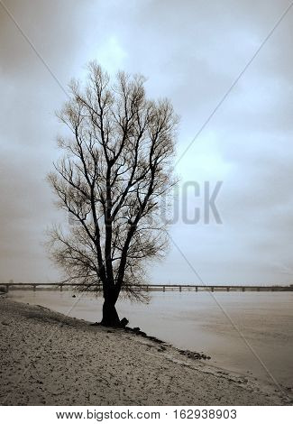 A scenic view of a lone tree on the bank of the Dnieper River in Kiev in late autumn is peaceful and reflecting. Duotone photo.