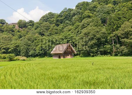 OGIMACI JAPAN - AUGUST 01 2016: Old shed of unique gassho style with thatched roof in Ogimachi village of Shirakawa-go district. World Heritage Site of UNESCO