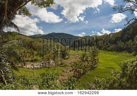 Rice fields between mountains, Flores Island, East Nusa Tenggara, Indonesia