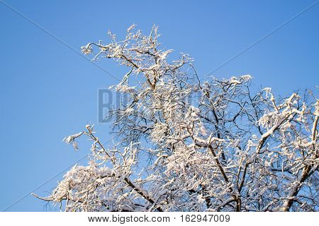 Tree covered with snow against the blue sky in the daytime