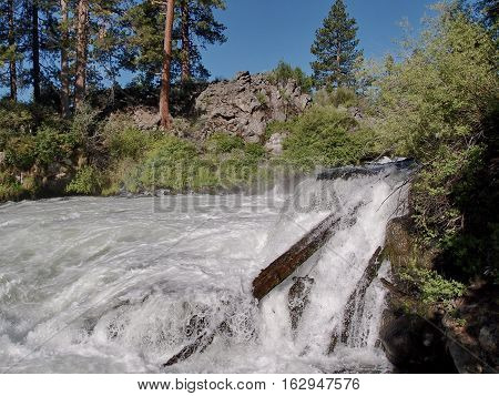 A portion of Dillon Falls with ponderosa trees and rugged geology on the banks of the Deschutes River in Central Oregon on a clear summer day.