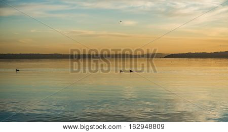 Birds paddles across the water at sunset on the Puget Sound.