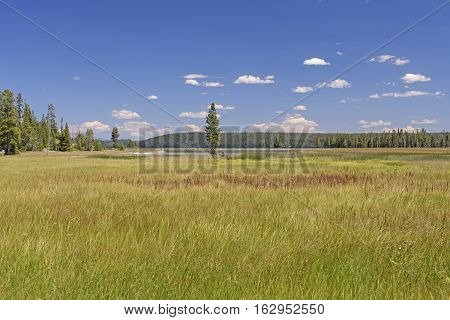 Meadow to Lakeshore in the Wilds of Yellowstone National Park in Wyoming