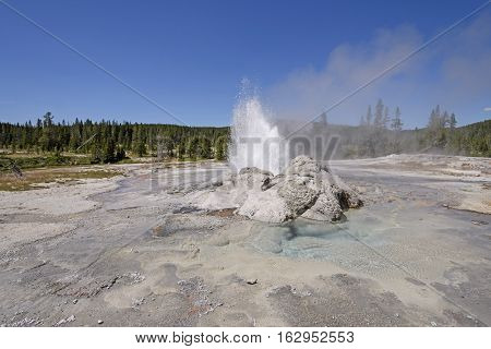 Minute Man Erupting Geyser Panorama in the Shoshone basin of Yellowstone National Park in Wyoming