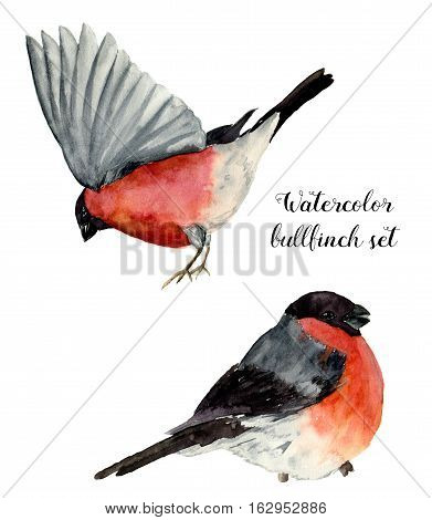 Watercolor bullfinch set. Hand painted birds with grey and pinkish plumage on white background. Christmas symbol. Winter birdie with red breast feathers. Vintage illustration for design or print