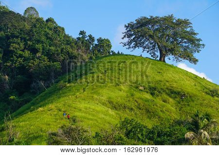 Beautiful scenery of hill,lonely tree and green grass amidst the warm sunshine in Timbun Mata island,Semporna,Sabah,Borneo.