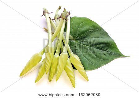 Moonflower (Ipomoea alba L.). Edible flower, Food.