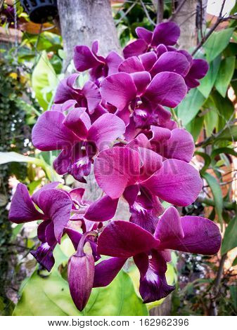 Orchids or orchids are flowering plants that are the most diverse group, with about 899 genera and 27,000 species are being accepted.