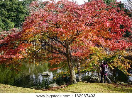 Autumn Scenery In Japan