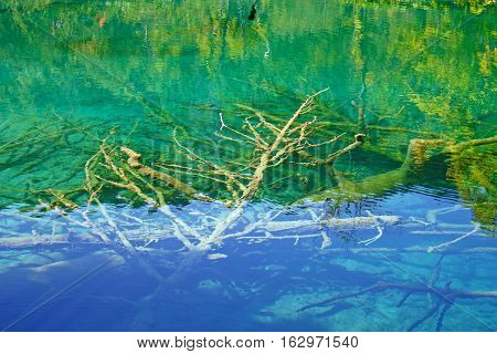 Submerged branches in deep cold water, nature