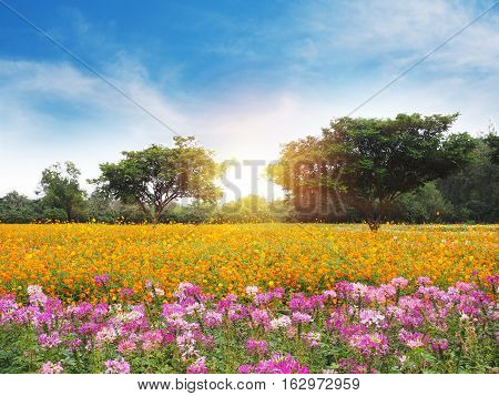 Colorful flower meadow and blue sky with white cloud.