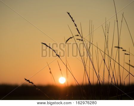 sundown on a cloudless evening and dry grass in the foreground