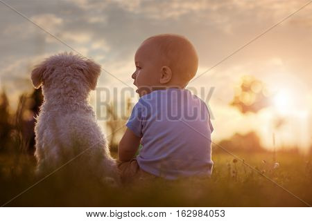 Happy baby boy playing with his dog in the park.