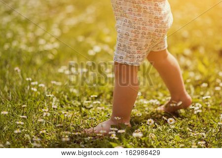Baby's first steps on the grass.The first independent steps.