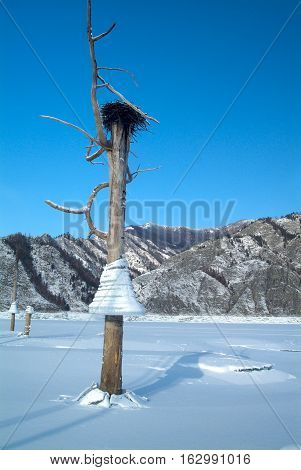 Icicles on a tree on a background of mountains in the lake