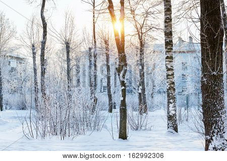 Winter Sunny Day In Snow Park