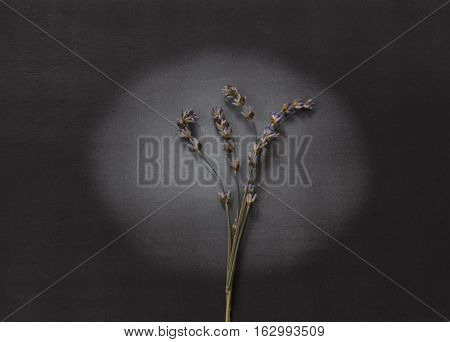 Dry lavender on light - condolence card with deepest sympathy