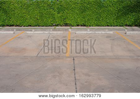 Empty car parking space with green tree background.