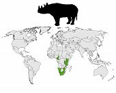 Detailed and colorful illustration of rhinoceros range poster
