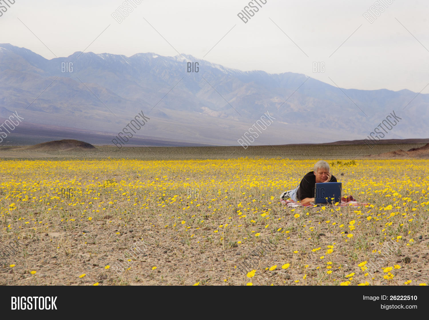 Botanist death valley relaxing amid image photo bigstock botanist in death valley relaxing amid the desert spring flowers catching up on some work mightylinksfo