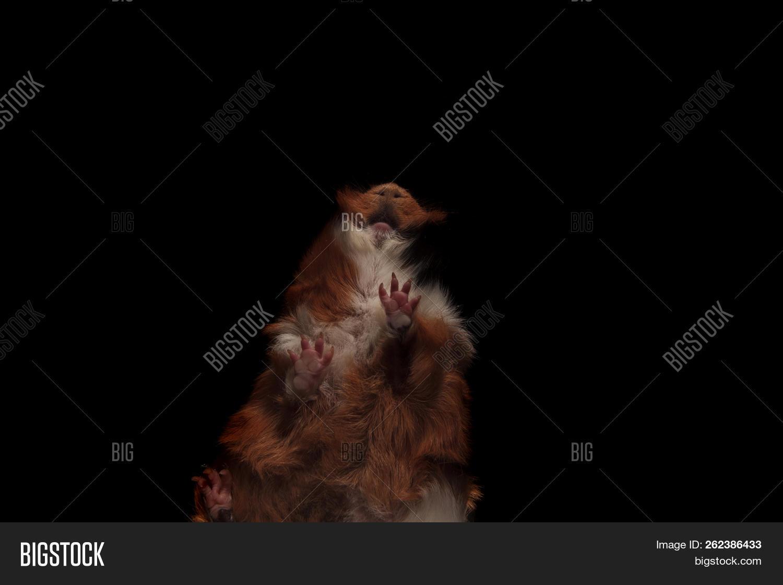 Head Adorable Brown Image & Photo (Free Trial) | Bigstock