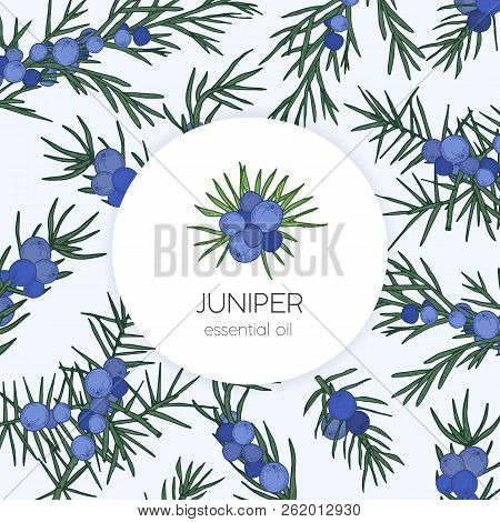 Juniper Essential Oil Label Or Tag Template. Design Element Decorated By Berries And Leaves Of Conif