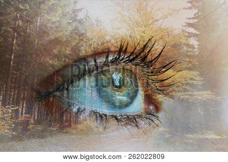 Double Exposure Of Human Eye With Autumnal Forest On The Background. Touch , Spirit And Contact With