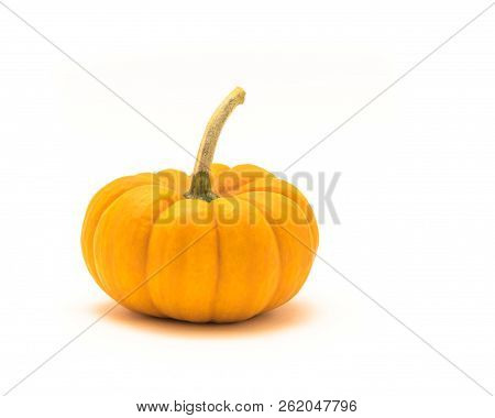 Single Mini Pumpkin With Long Stem Isolate On White