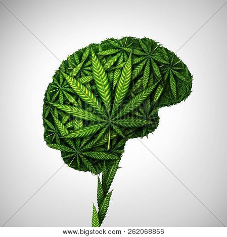 Cannabis Brain And Marijuana Neurological Effect On Thinking As A Human Organ Made Of Weed Leaves As