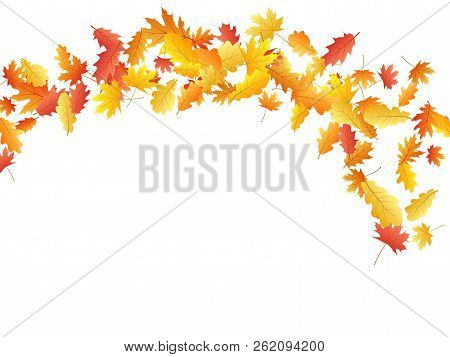 Flying Oak And Maple Leaf Abstract Background Seasonal Vector Illustration. Autumn Leaves Falling Gr