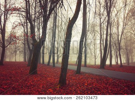 Autumn November foggy landscape. Deserted autumn park alley with bare autumn trees and dry fallen orange autumn leaves, mysterious autumn nature scene