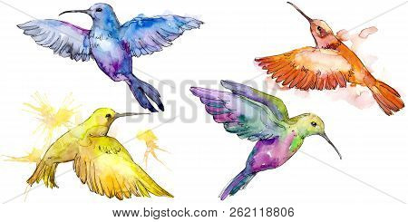 Sky Bird Colorful Colibri In A Wildlife By Watercolor Style Isolated.