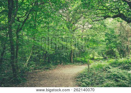 Path Through Banstead Woods In Surrey, England