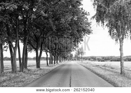 Road In Field Accompanied By Row Of Green Trees, Skyline And Nature On Background. Landscape Of Flat