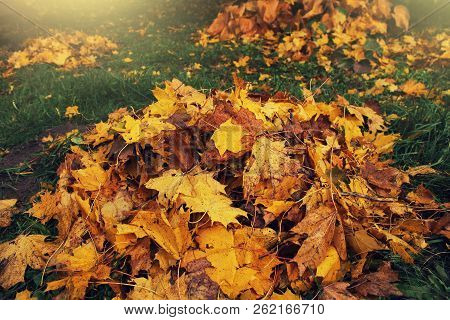 Pile of fallen leaves in autumn park. Fall background poster