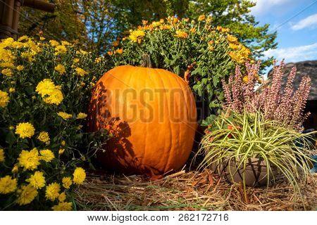 An image of an autumn pumpkin with flowers