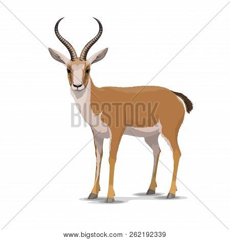 Goitered Gazelle Animal Character. Vector Isolated Cartoon African Wild Black-tailed Gazelle Species