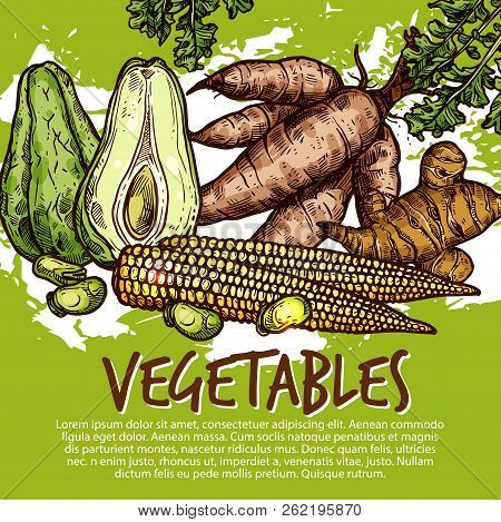 Vegetables And Exotic Veggies Or Edible Roots. Vector Organic Sweet Potato, Avocado Or Legume Beans