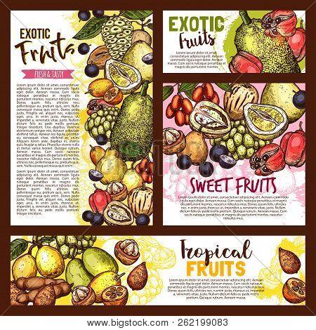 Exotic Tropical Fruits Sketch, Farm Market. Vector Tasty Salak, Jujube, Sapodilla And Ackee Apple, A