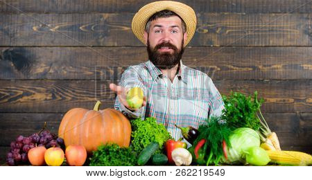 Man Cheerful Bearded Farmer Hold Corncob Or Maize Wooden Background. Farmer With Homegrown Harvest.
