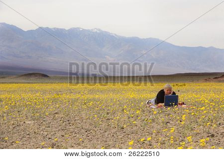 botanist in Death Valley relaxing amid the desert spring flowers catching up on some work