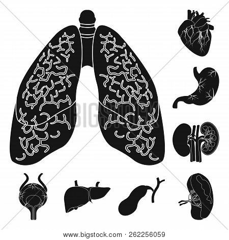 Vector Illustration Of Body And Human Logo. Collection Of Body And Medical Stock Vector Illustration