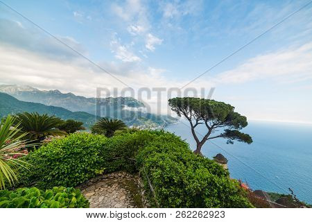Pine Tree In Ravello Colorful Coast, Italy. World Famous Amalfi Coast, Unesco World Heritage Site