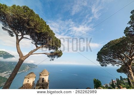 Pine Tree In Ravello Coast, Italy. World Famous Amalfi Coast, Unesco World Heritage Site