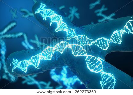 3d Illustration X-chromosomes With Dna Carrying The Genetic Code. Genetics Concept, Medicine Concept