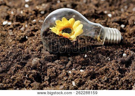 Flower Growing Inside A Light Bulb On Soil, Concept For Multiple Uses