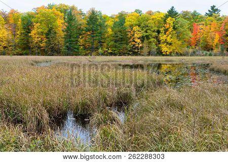 Native Lakeshore Grasses, Treeline, And Marsh Near Cumberland, Wisconsin.