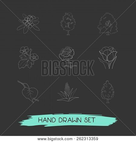 Set Of Nature Icons Line Style Symbols With Tulip, Ash, Beech And Other Icons For Your Web Mobile Ap