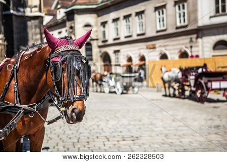 Horse On Historic Europe Vienna Centre Square